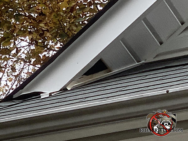 Missing section of soffit panel at a roof junction allowed squirrels into the attic of a house in Douglasville Georgia