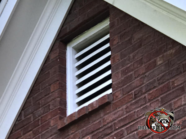 Gable vent on a brick house in East Brainerd Tennessee allowed gray squirrels into the attic of the house