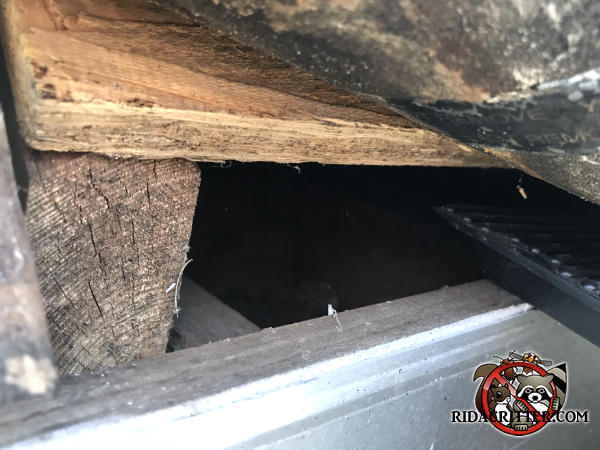Squirrels got into a house in Kennesaw Georgia through a two inch construction gap at the edge of the roof