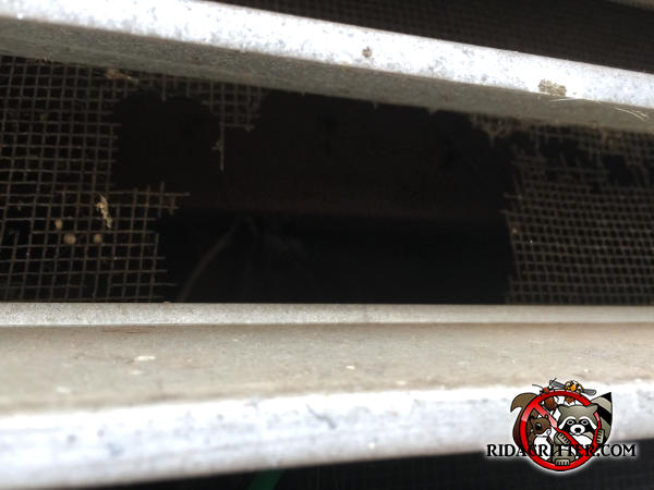 The screen behind the gable vent is rotting and squirrels made a hole through it to get into a house in Atlanta