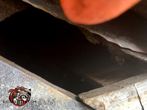 Construction gap of about two inches in the roof of a house in Atlanta allowed squirrels to get into the attic