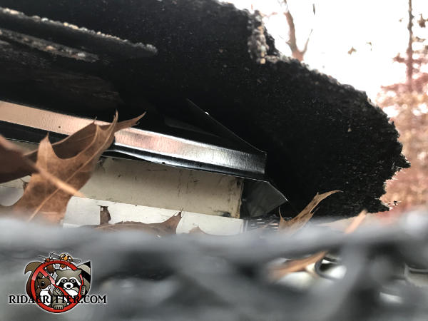 Squirrels got into a house in Canton Georgia though a gap between the roof sheathing and the fascia