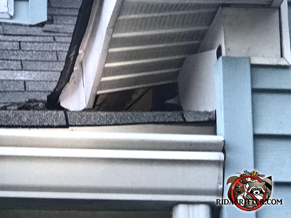 The soffit panel closest to a roof junction of a house in Rome Georgia is missing and squirrels got in though the opening