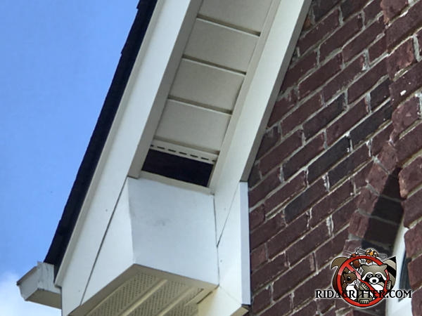 Missing section of soffit panel allowed squirrels to get into the roof of a house in Lithonia Georgia