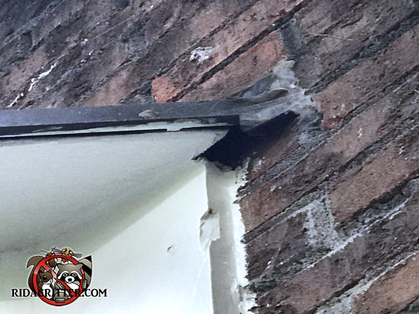 Two inch construction gap where the soffit meets the brick wall allowed squirrels into a house in Marietta Georgia