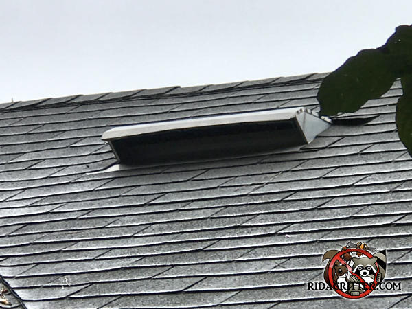 Metal roof vent with the screen missing allowed squirrels into the attic of a house in Marietta Georgia