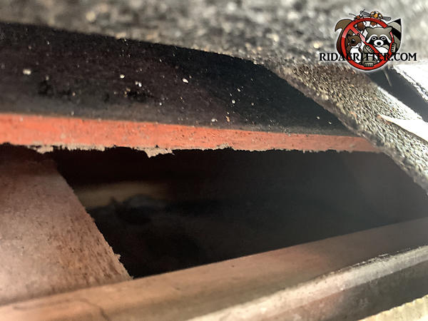 Gap of more than two inches between the roof sheathing and the fascia allowed squirrels into the attic of a house in Rydal Georgia