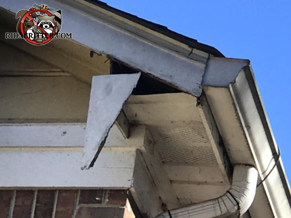 A triangular piece of roof trim is broken and hanging off the soffit exposing a hole that squirrels used to get into the attic