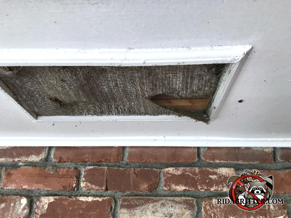 Squirrels got into the attic of a house in Chattanooga through a hole or tear in the soffit screen