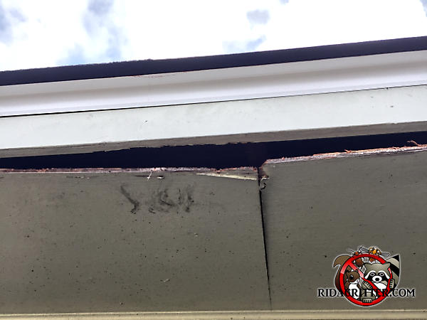 The plywood soffit panel of a house in Duluth was sagging and squirrels gnawed their way in along the edges