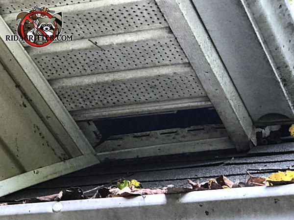 A missing section of soffit panel by a roof junction of a house in Newnan Georgia allowed squirrels into the attic of the house