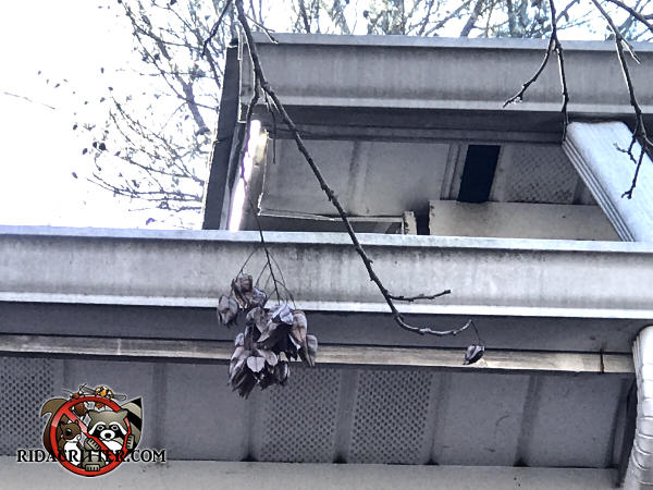 Missing four inch section of soffit panel allowed squirrels to get into the attic of a house in Snellville Georgia