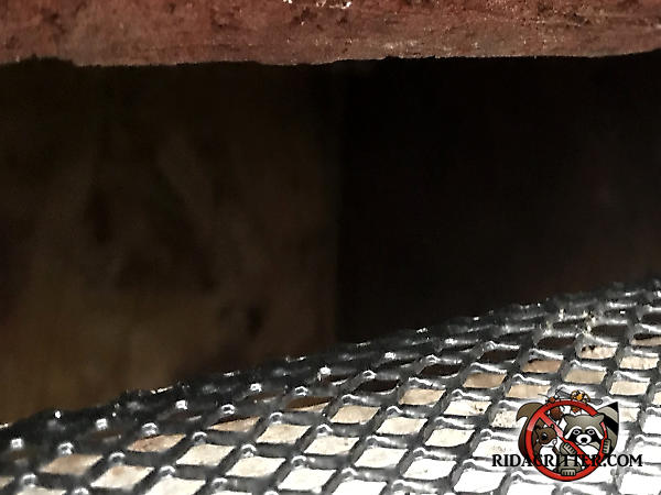Piece of steel mesh being test fitted against a squirrel entry gap in the roof of a house in Chattanooga