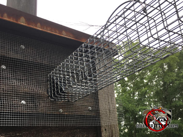 A cage style squirrel trap installed with one end over a squirrel hole with hardware cloth screwed onto the siding around the hole at a house in Conyers Georgia