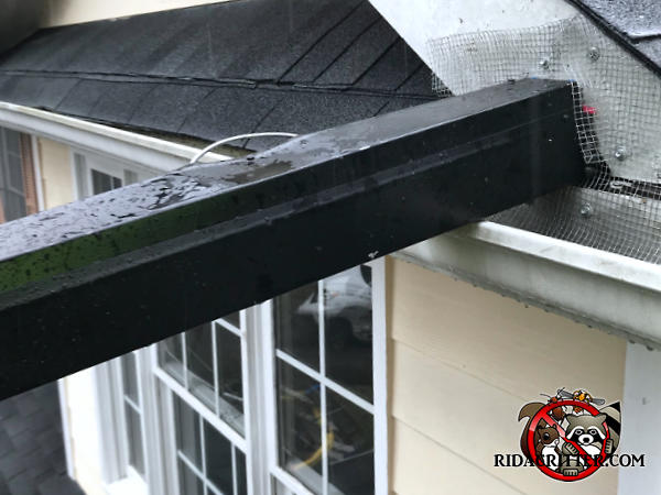 Metal covered squirrel trap with one end against a hole in the roof trim on a house in East Ridge Tennessee