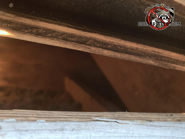 Squirrels got into a house in Snellville, Georgia through a two inch gap between the roof sheathing and fascia