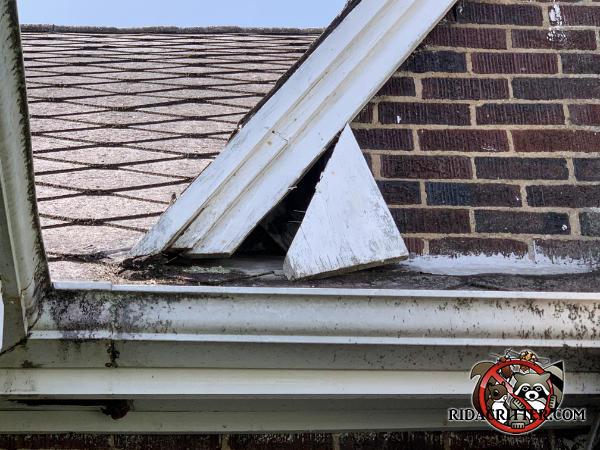 A piece of roof trim is hanging down at an angle and exposed a gap in the roof that needs to be repaired to keep squirrels out of the attic of a McCaysville Georgia home.