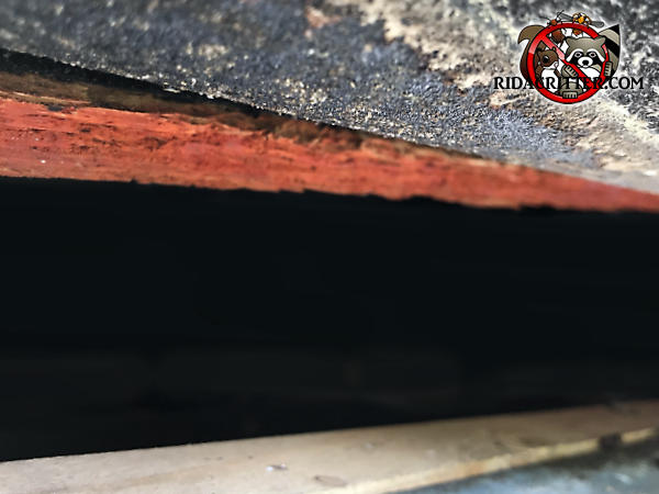 Two inch gap in the edge of the roof of a house in Acworth Georgia allowed squirrels to get into the attic