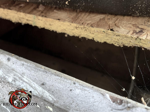 Two inch high gap between the roof sheathing and the fascia board needs to be sealed up to keep gray squirrels out of the attic of a house in Alpharetta Georgia