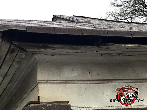 Serious water damage to the wooden soffit panel near the corner of the roof of a house in Atlanta allowed squirrels into the attic.