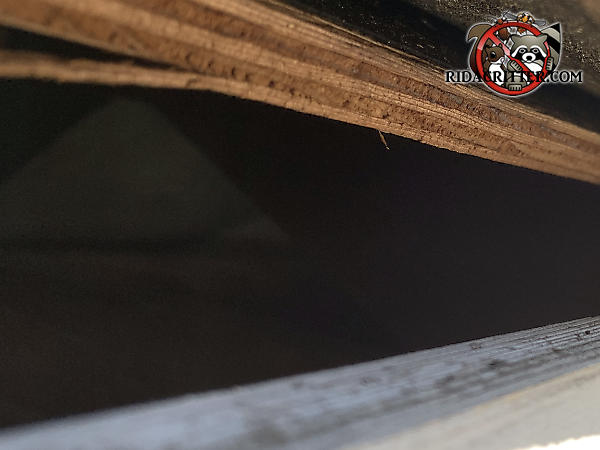 Squirrels got into the attic of a house in Atlanta through a three inch gap between the roof sheathing and fascia