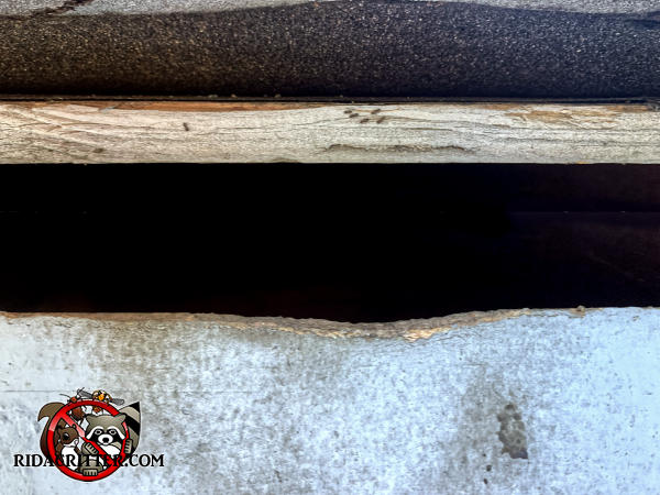 Squirrels gnawed a bit at the wooden fascia to enlarge an inch and a half gap in the edge of the roof so they could get into the attic of a house in Atlanta.