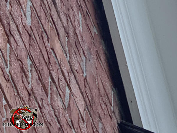 roughly two inch gap between the bricks and the roof frieze board allowed squirrels to get into the attic of a house in Tyrone Georgia.