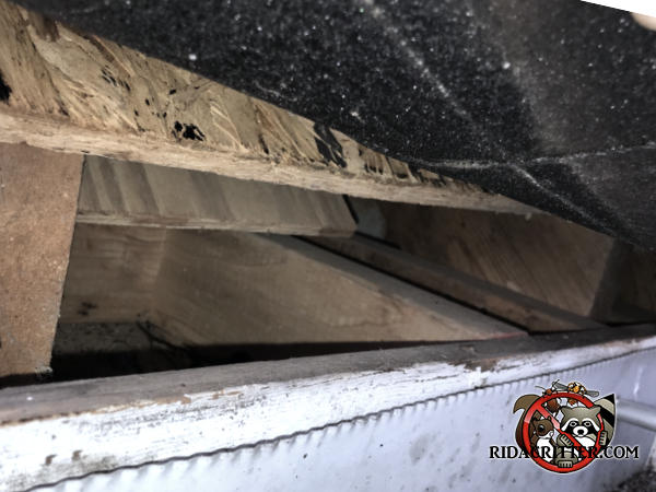 Gap of about three inches between the flake board roof sheathing and the fascia allowed squirrels into the attic of a house in Bethlehem Georgia