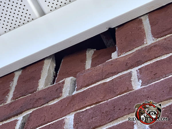 Two bricks are pushed into the house by the roof trim which allowed squirrels into a house in Roswell Georgia