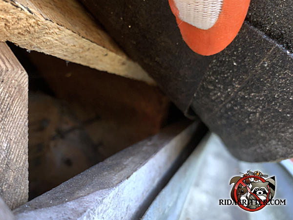 Two inch gap between the roof sheathing and fascia allowed squirrels into the attic of a house in Chattanooga