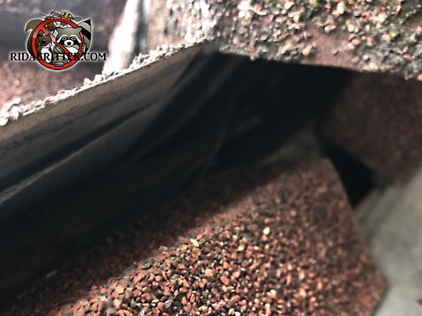 Space between two layers of shingles exposed a gap through which squirrels got into the attic of a house in Commerce Georgia