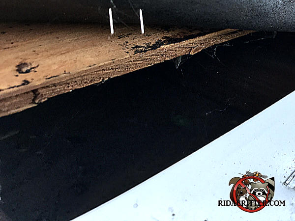 Three inch gap at the edge of the roof sheathing allowed squirrels to get into the attic of a house in Conley Georgia