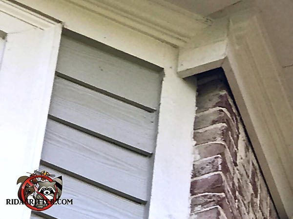 The wooden trim has a roughly two by three inch rectangular gap where the siding meets the bricks that allowed squirrels into the house