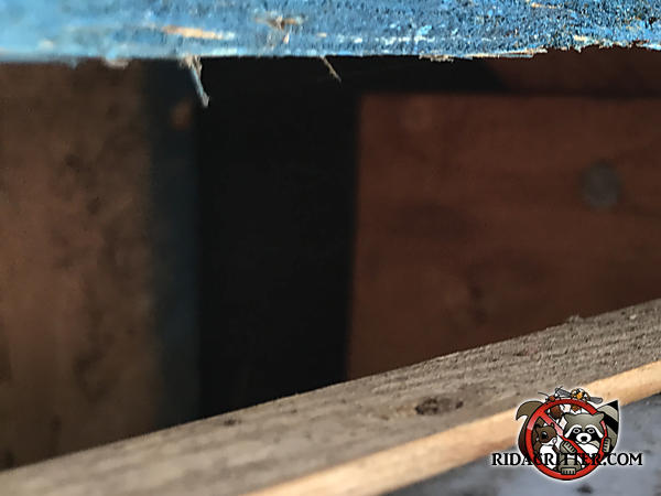 Three inch gap in the edge of the roof allowed gray squirrels to easily get into the attic of a house in Dallas Georgia