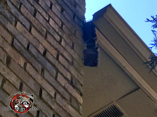 The soffit of a house in Doraville Georgia sticks out a few inches past the chimney and the end cap fell off which allowed squirrels into the soffit