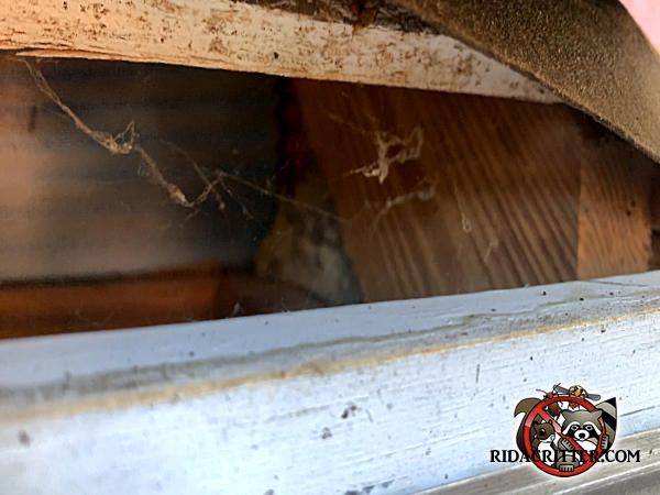 Two and a half inch gap at the edge of the roof allowed squirrels into the attic of a house in Duluth Georgia