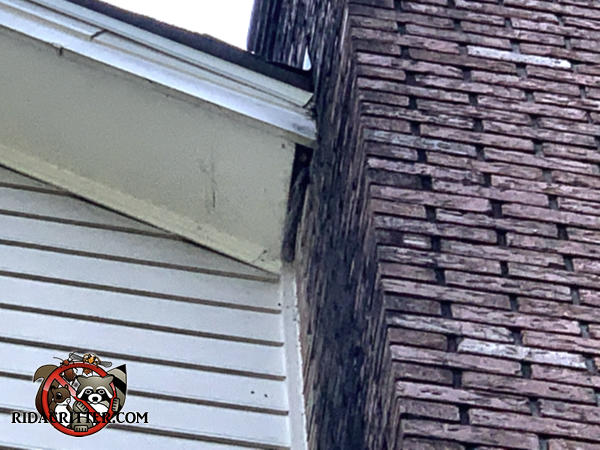 Inch a half gap between the soffit panel and the heavily stained chimney has not been further gnawed by the squirrels who used the gap to get into a house in Dunwoody Georgia