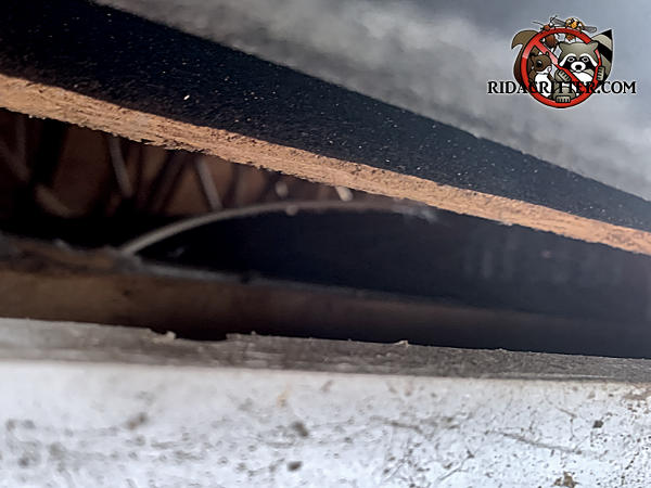 Gap of almost three inches between the roof sheathing and fascia allowed squirrels into the attic of a house in Hosechton Georgia
