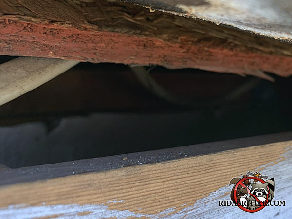 Three inch gap in the edge of the roof needs to be closed up to prevent squirrels from getting into the attic of a Kennesaw Georgia home.