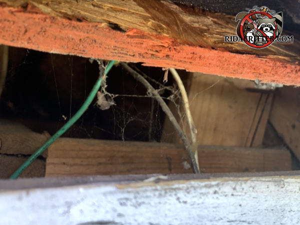Gap of a bit over two inches at the edge of the roof allowed grey squirrels to get into the attic of a house in Marietta Georgia