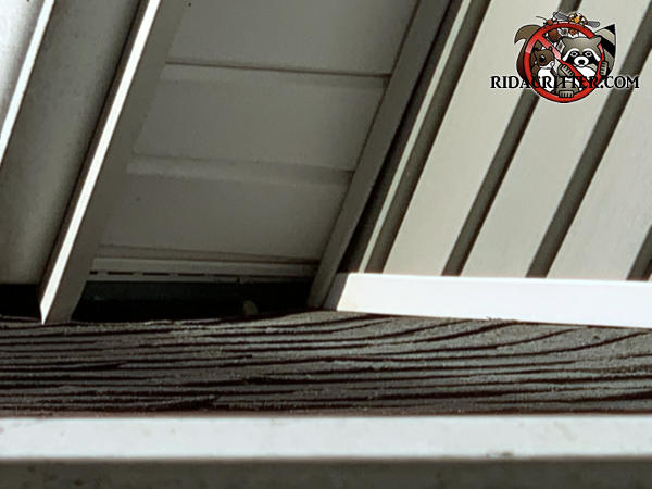 Two inch gap in the soffit panel at a roof junction point needs to be repaired to keep squirrels out of the attic of a Fayetteville Georgia home.