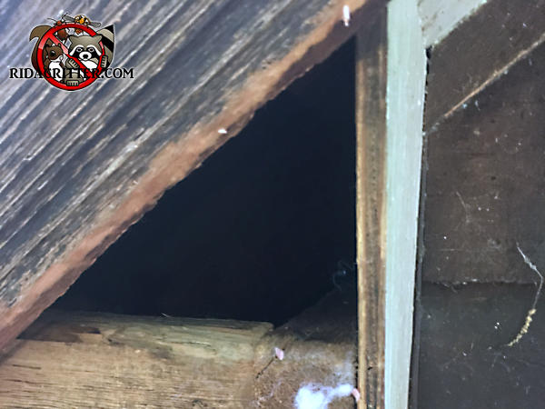 Triangular gap caused by the wooden end cap of the soffit falling off needs to be repaired to keep squirrels out of the attic of a house in Helena Alabama.