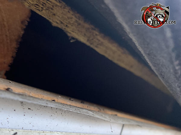 Two inch gap in the edge of the roof of a house in Stone Mountain Georgia allowed squirrels to get into the attic
