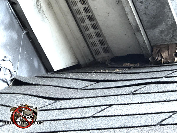 The roof of a house in Stone Mountain Georgia is noticeably sagging and opened a gap at a junction through which squirrels got into the house