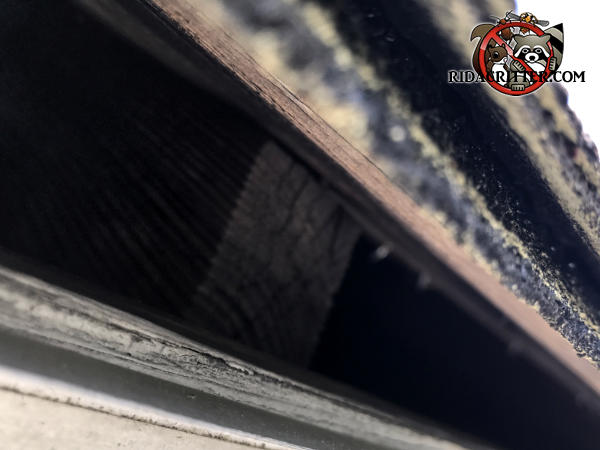 Gap of about two inches at the edge of the roof allowed squirrels into the attic of a house in Stone Mountain Georgia