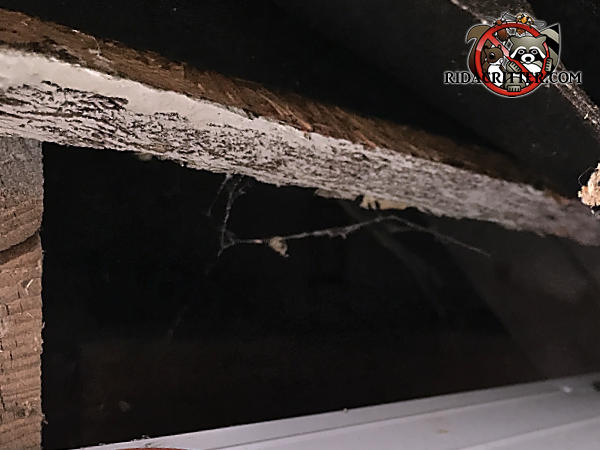 Roughly three inch gap in the roof sheathing of a house in Stone Mountain Georgia that allowed squirrels into the attic