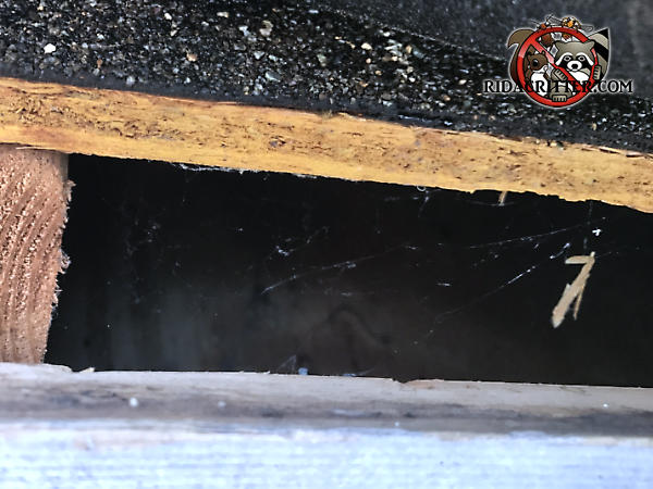 Two inch gap between the roof sheathing and fascia that allowed squirrels into a house in Woodstock Georgia