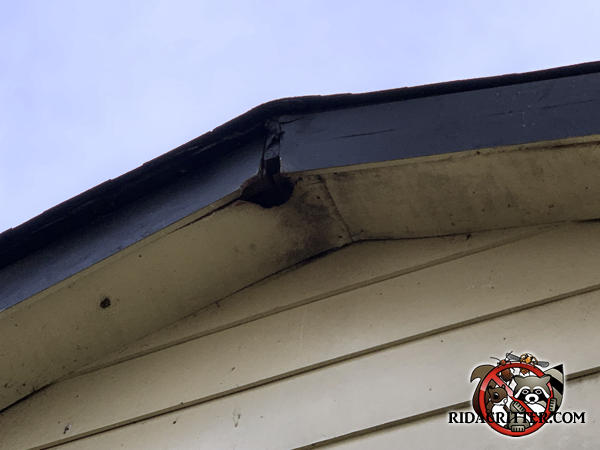 Squirrel hole in the soffit panel near the peak of the roof of a house in Adairsvills Georgia