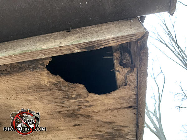 Squirrel chew hole in the front corner of a wooden soffit panel at a house in Atlanta