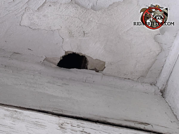 Squirrel hole gnawed through a sheetrock or plywood soffit panel on a house in Atlanta Georgia